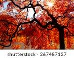 Autumn Season In Japan.