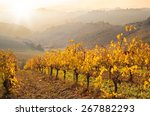yellow leaves vineyard in fall | Shutterstock . vector #267882293