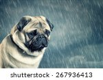 sad dog | Shutterstock . vector #267936413