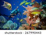 Colorful Underwater Offshore...