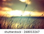 wild grasses at golden summer... | Shutterstock . vector #268013267