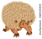 A Borwn Porcupine On White...
