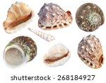 shells | Shutterstock . vector #268184927
