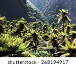 beautiful rainforest with palm... | Shutterstock . vector #268194917