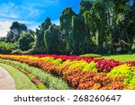 Multicolored Alley Of Flowers...