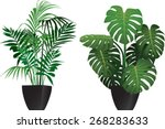 kentia and philodendron plants...