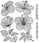 Hibiscus Flower  Graphic Head...