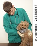 vet examining an red toy poodle | Shutterstock . vector #268580567