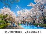Tokyo  Japan   April 4  Cherry...