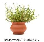 thyme plant in a terracotta pot ... | Shutterstock . vector #268627517