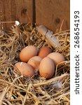 Nest With Chicken Eggs