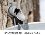maple sap dripping into bucket  ... | Shutterstock . vector #268787153