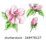 apple flower in blossom   Shutterstock .eps vector #268978127