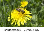 Bee Pollinated Of Yellow Flower