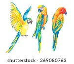tropical birds isolated on... | Shutterstock .eps vector #269080763