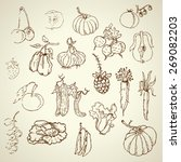set of hand drawn vegetables | Shutterstock .eps vector #269082203