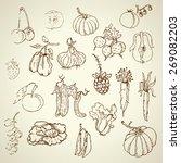 set of hand drawn vegetables | Shutterstock .eps vector #269082203