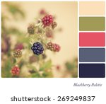 blackberries growing in the... | Shutterstock . vector #269249837