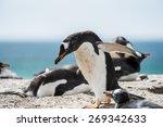 little penguin on the sand | Shutterstock . vector #269342633