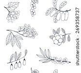natural berries sketch seamless ... | Shutterstock .eps vector #269358737