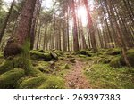 sunlight through the trees in... | Shutterstock . vector #269397383