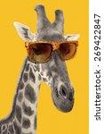 portrait of a giraffe with... | Shutterstock . vector #269422847