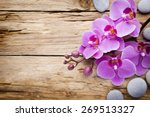 pink orchid with buds. greeting ... | Shutterstock . vector #269513327