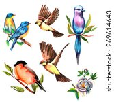 birds watercolor on branches... | Shutterstock .eps vector #269614643