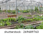 Small photo of Dutch Greenhouse with several small community allot gardens