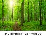 sun beam in a green forest   Shutterstock . vector #269700593