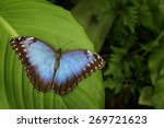 Beautiful Blue Butterfly Blue...