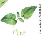 mint leaves in watercolors....   Shutterstock .eps vector #269840147