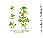 watercolor vector thyme | Shutterstock .eps vector #269896253