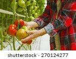 tomatoes harvest | Shutterstock . vector #270124277