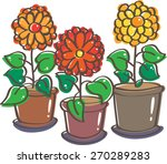 Three Pots Of Blooming Flowers