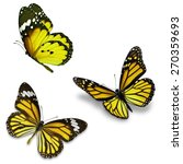 three yellow butterfly ... | Shutterstock . vector #270359693