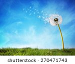 Dandelion with seeds blowing...
