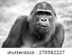 Black And White Portrait Of An...