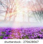 saffron geyfelya first... | Shutterstock . vector #270628067