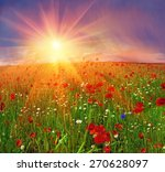 field with bright blooming... | Shutterstock . vector #270628097