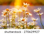 field of daisies and sunshine | Shutterstock . vector #270629927