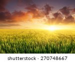 filed during bright sunset.... | Shutterstock . vector #270748667