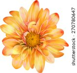 Yellow Orange Chrysanthemum...