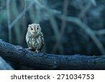 lovely oriental scops owl  ... | Shutterstock . vector #271034753