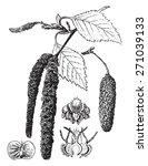 birch  vintage engraved... | Shutterstock .eps vector #271039133