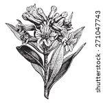 Alpine Rose  Vintage Engraved...
