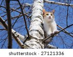 a cat on a tree looking down. | Shutterstock . vector #27121336