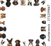 breed dogs | Shutterstock . vector #271259867