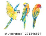 tropical birds isolated on... | Shutterstock . vector #271346597