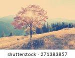 vintage autumn tree at sunset.   Shutterstock . vector #271383857